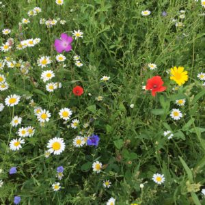 Wildflower Meadow Mix
