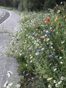 Wildflower Meadow Seed Mix